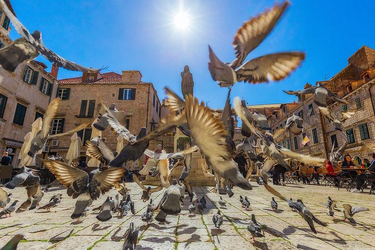 pigeons-3807277_1920.jpg