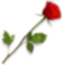 rose-hd-png-rose-png-hd-667.png