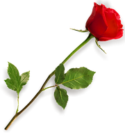 rose-hd-png-rose-png-hd-667.png