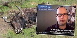 tomasåberg-e1602082277136.jpg