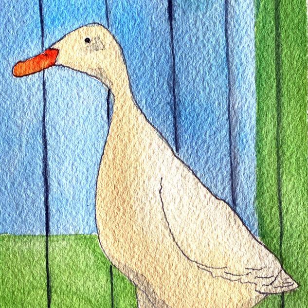 Duck Duck (2020)