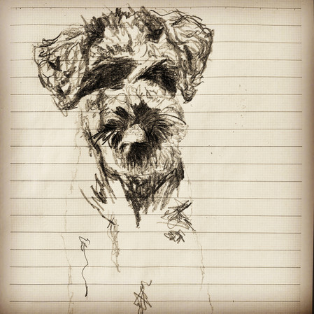pluto the schnoodle