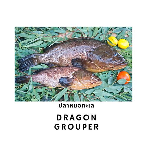 Dragon Grouper / 500G หมอทะเล