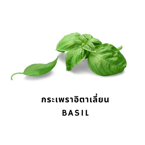 กระเพราอิตาเลี่ยน 50G Basil