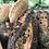 Thumbnail: Fruit Bread 250G / CONKEY'S