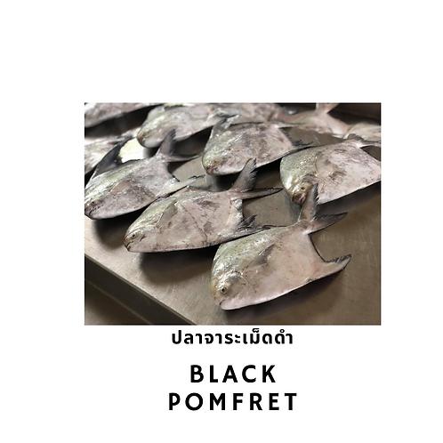 Black Pomfret / 1 kg ปลาจาระเม็ดดำ