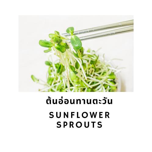 Sunflower Sprouts 200G ต้นอ่อนทานตะวัน