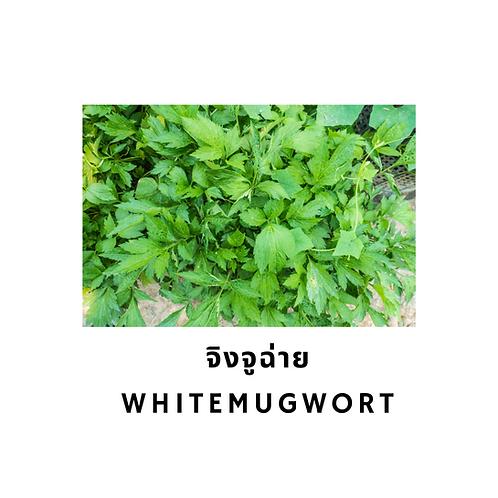 จิงจูฉ่าย 200G White Mugwort