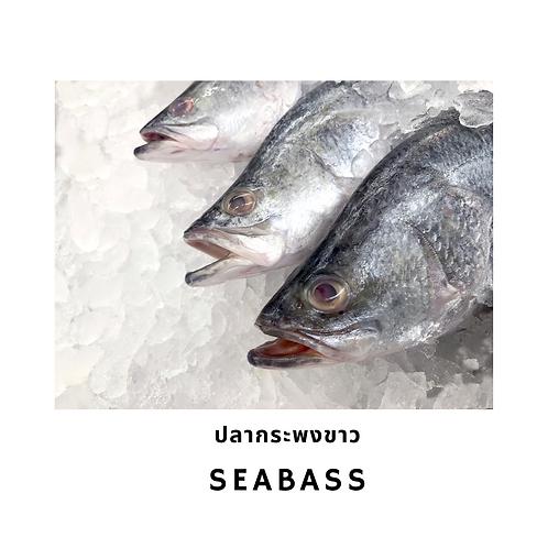 Seabass fillet 500G ปลากระพงขาวแล่