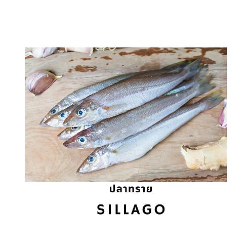 Sillago / 500G ปลาทรายขาว