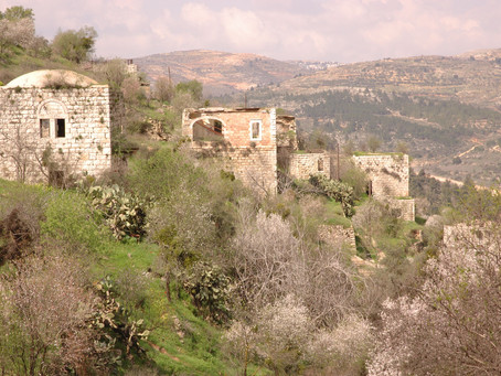 When Nature Becomes Ideology: Lifta's Silence and the Suburban Landscape of Jerusalem