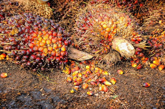 What's the problem with palm oil?
