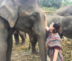 lisa-elephant.jpg