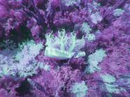 Jellyfish Forest