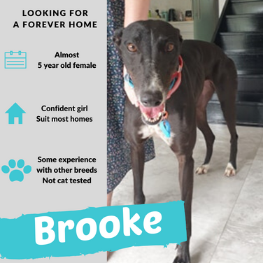 Brooke is checking out her forever home
