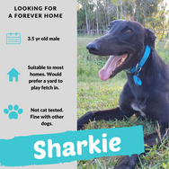 Sharkie checking out his forever home