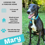 Mary is checking out her forever home
