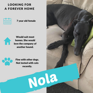 Nola is checking out her forever home