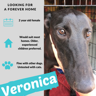 Veronica is checking out her forever home