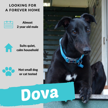 Dova is checking out his forever home