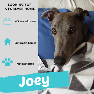 Joey is checking out his forever home