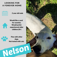 Nelson is checking out his forever home