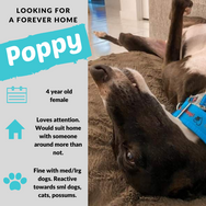 Poppy is checking out her forever home