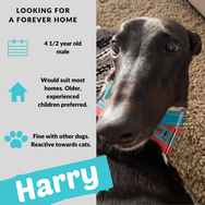 Harry is checking out his forever home
