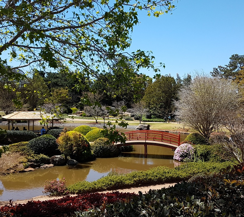 National-Seniors-Redcliffe-Beautiful Japanese Gardens