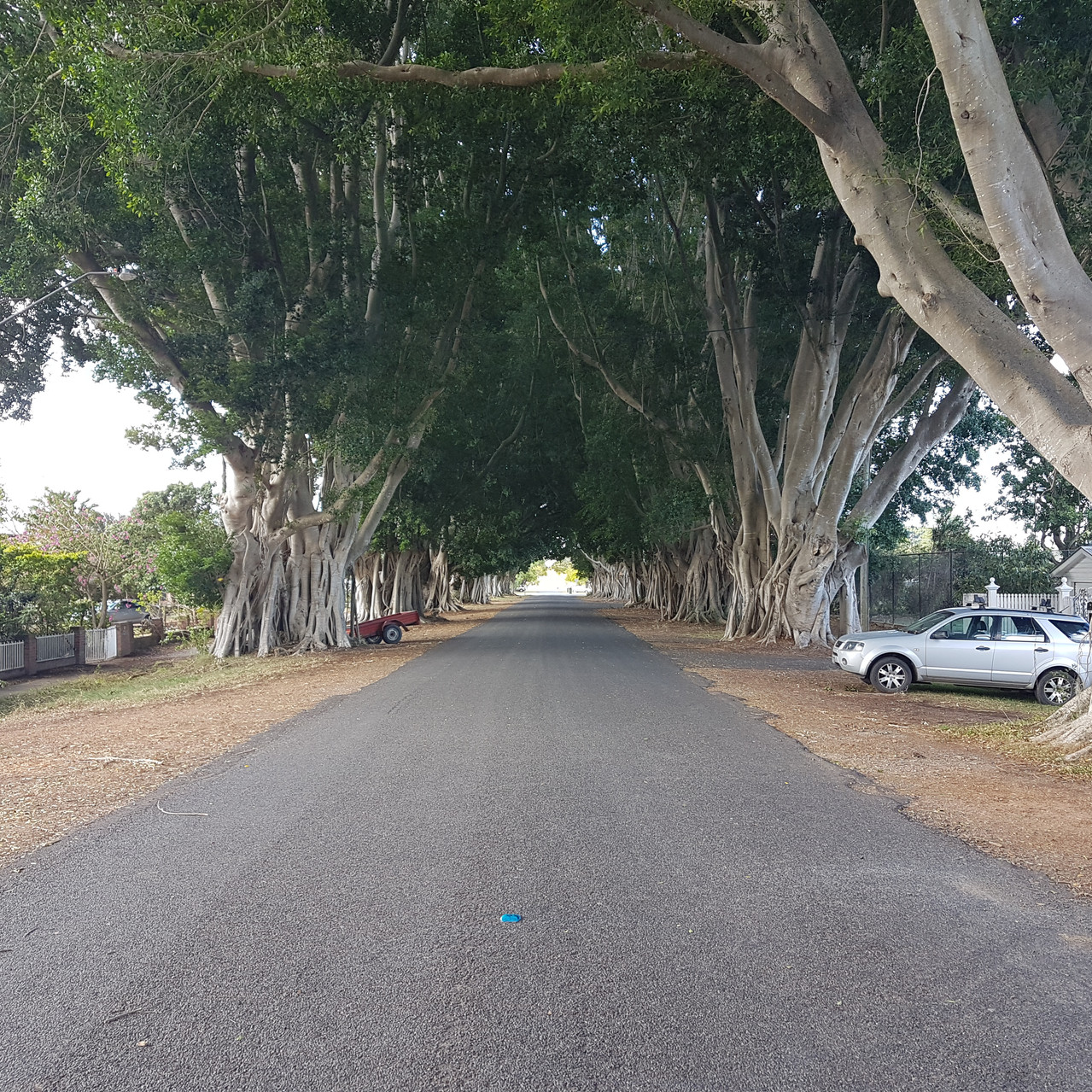 National-Seniors-Redcliffe-Avenue of Fig