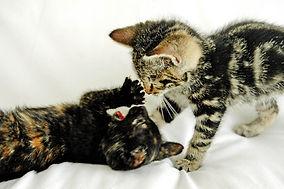 playful-kittens-2-1383913.jpg