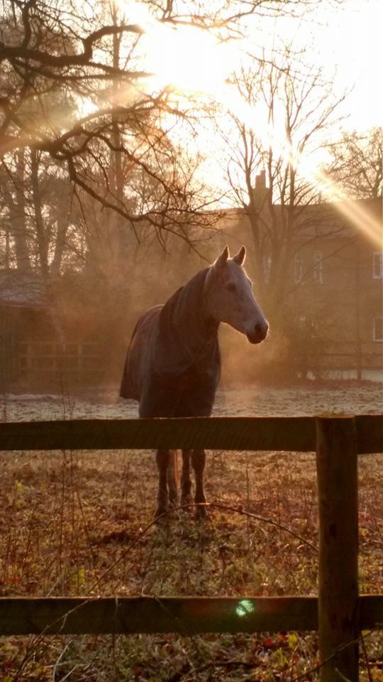 Standard Equine Session