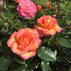 rosier-roberto-alagna-adarequatro.jpg