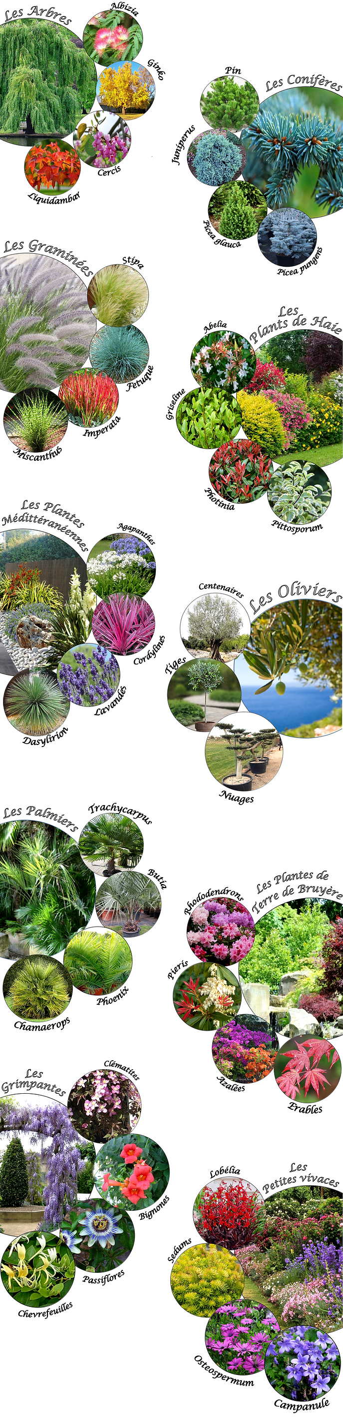 Plants_de_pépinière.png