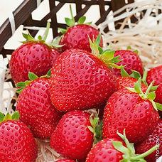 6034-6932-6018-fraisier_charlotte-taille