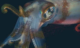 squid-shutterstock.jpg