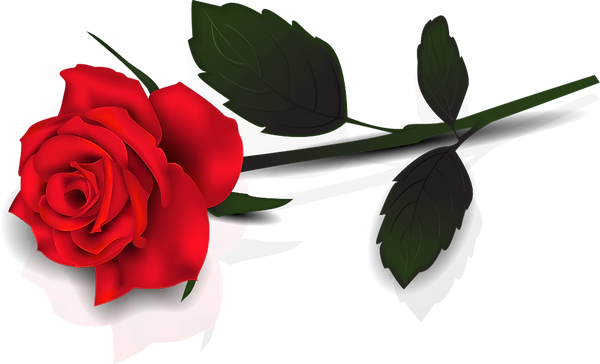 clipart-of-the-single-red-rose.png