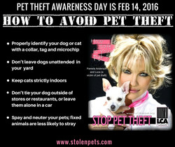 Pam Anderson Pet Theft