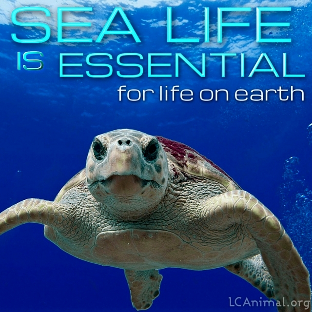 Sea Life is Essential