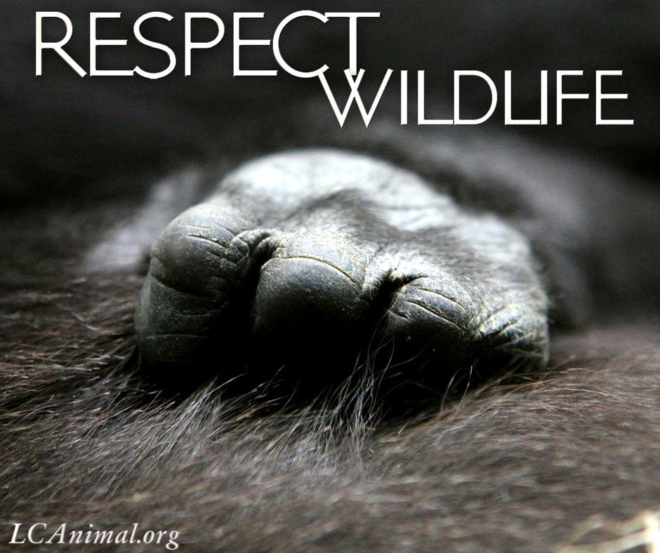 Respect Wildlife