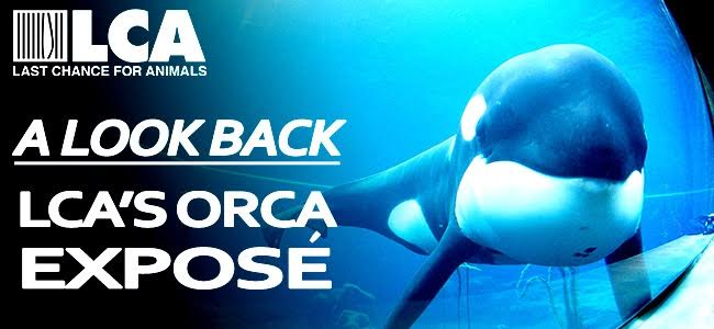 Orca Expose