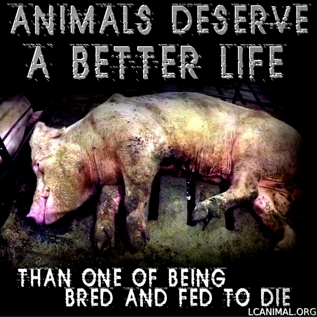 They Deserve a Better Life