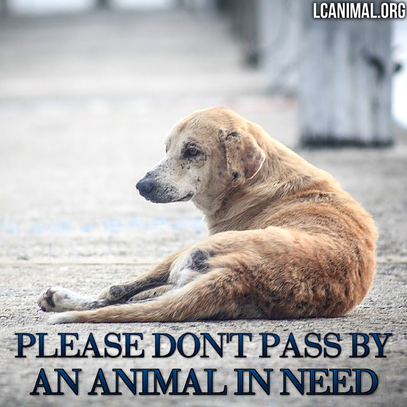Don't Pass By an Animal in Need