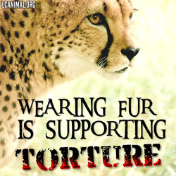 Wearing Fur is Supporting Torture