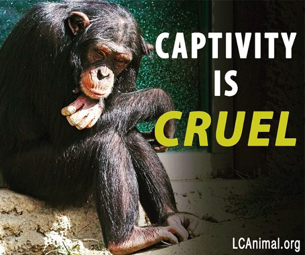 Captivity is Cruel