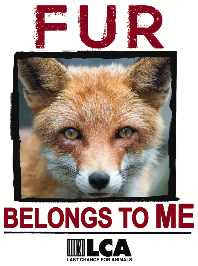 Fur Belongs to Me