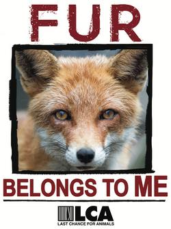 Fur Belongs to Me