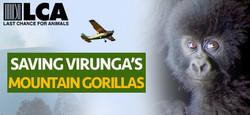 VirungaPlane_AA