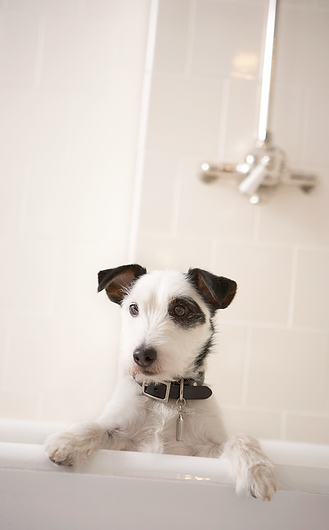 Dog Bath | SouthPaws Dog Daycare, Boarding & Spa