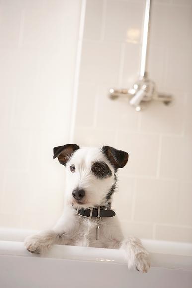 Having a Bath